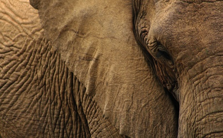Elephant Care Association of South Africa, ECASA, Image Aimee Vogelasang via Unsplash