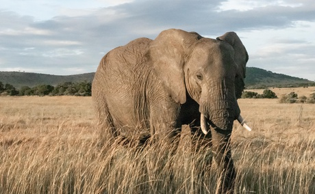 Elephant Care Association of South Africa, ECASA, Image by El Carito via Unsplash
