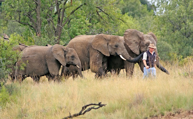 Adventures with Elephants, ECASA, Elephant Care Association of South Africa